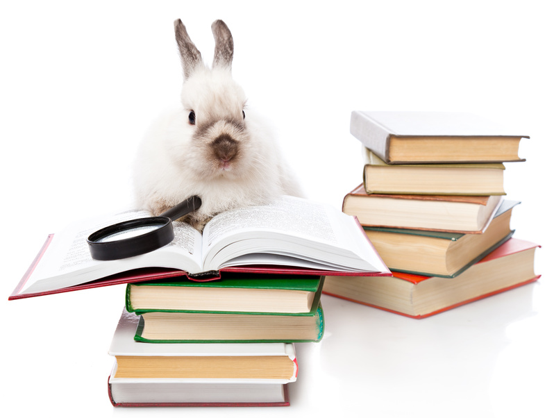 Supplies for Rabbit Breeders