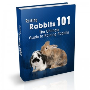 Raising and Breeding Rabbits