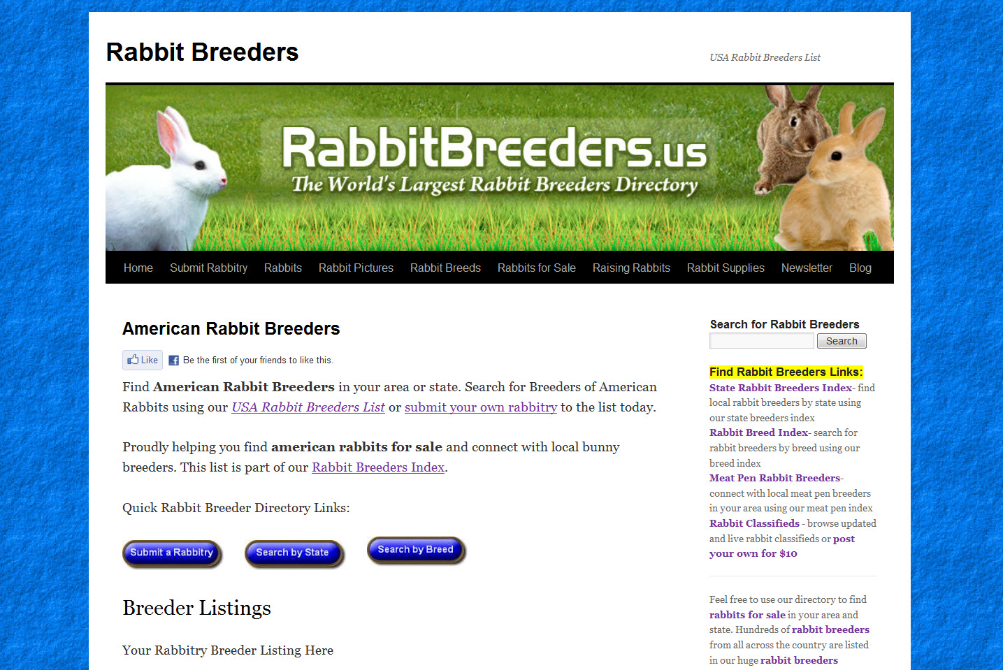 American Rabbits for Sale