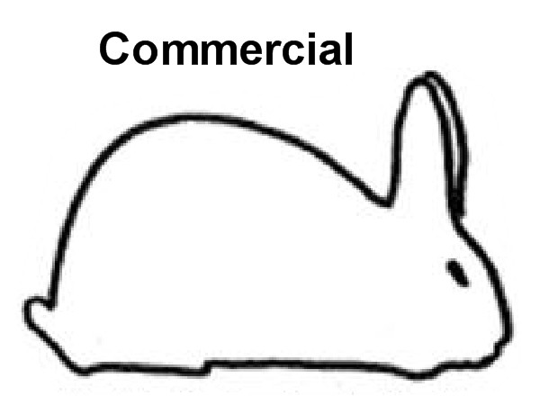 Commercial Rabbit Breeds