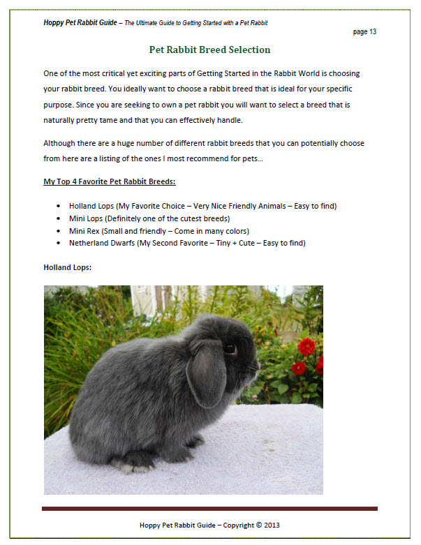 Hoppy Pet Rabbit Guide Sample Page