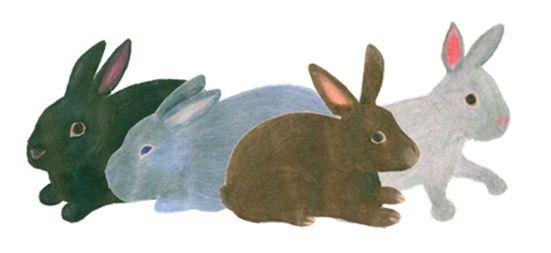 recognizing rabbit color patterns