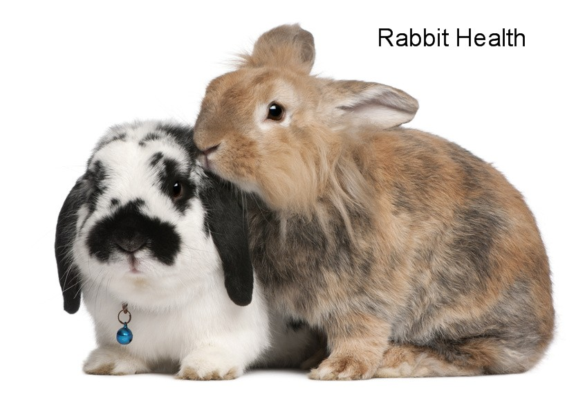 Rabbit Health