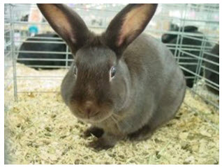 Rabbit Pattern Self