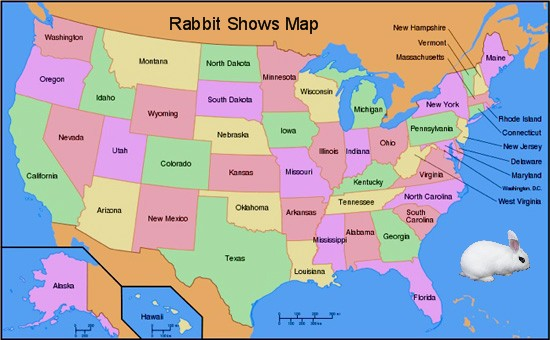 Rabbit Shows