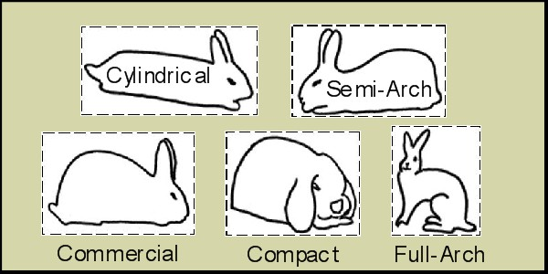 Types of Rabbit Breeds