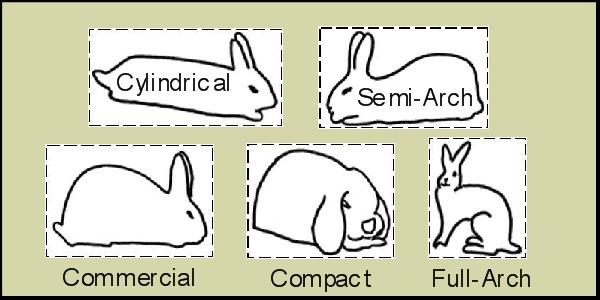 Types of Rabbit Breeds