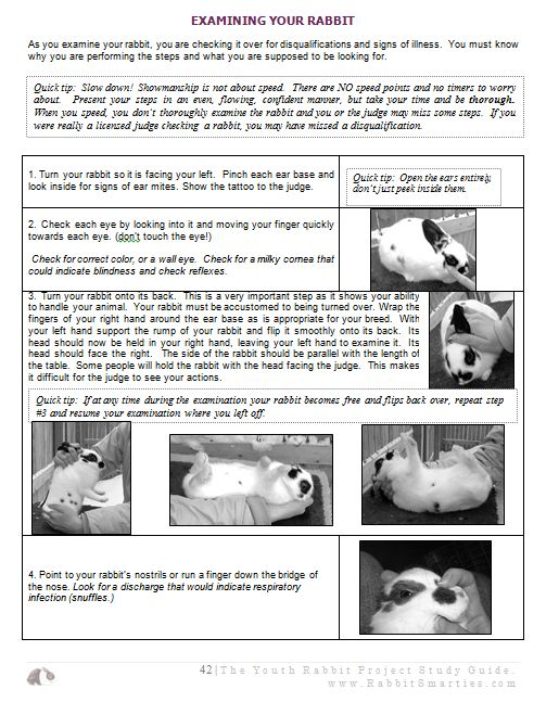 Youth Rabbit Project Guide Sample Page