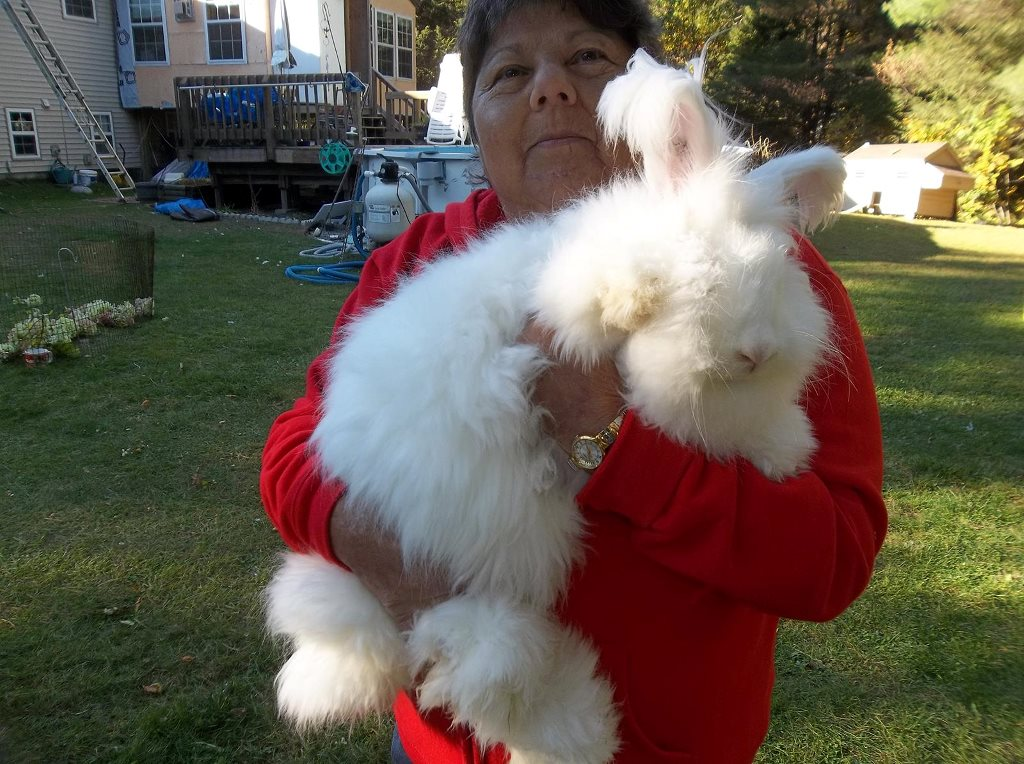 German Hybrid Rabbits