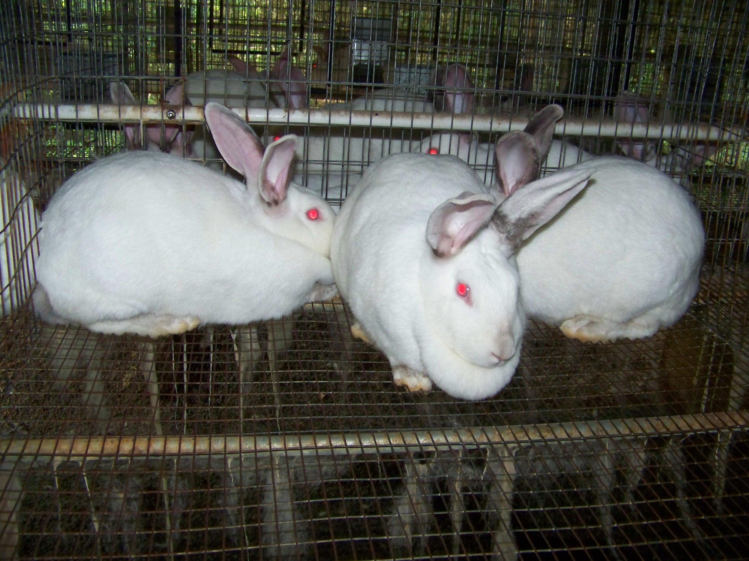 Breeding Trios