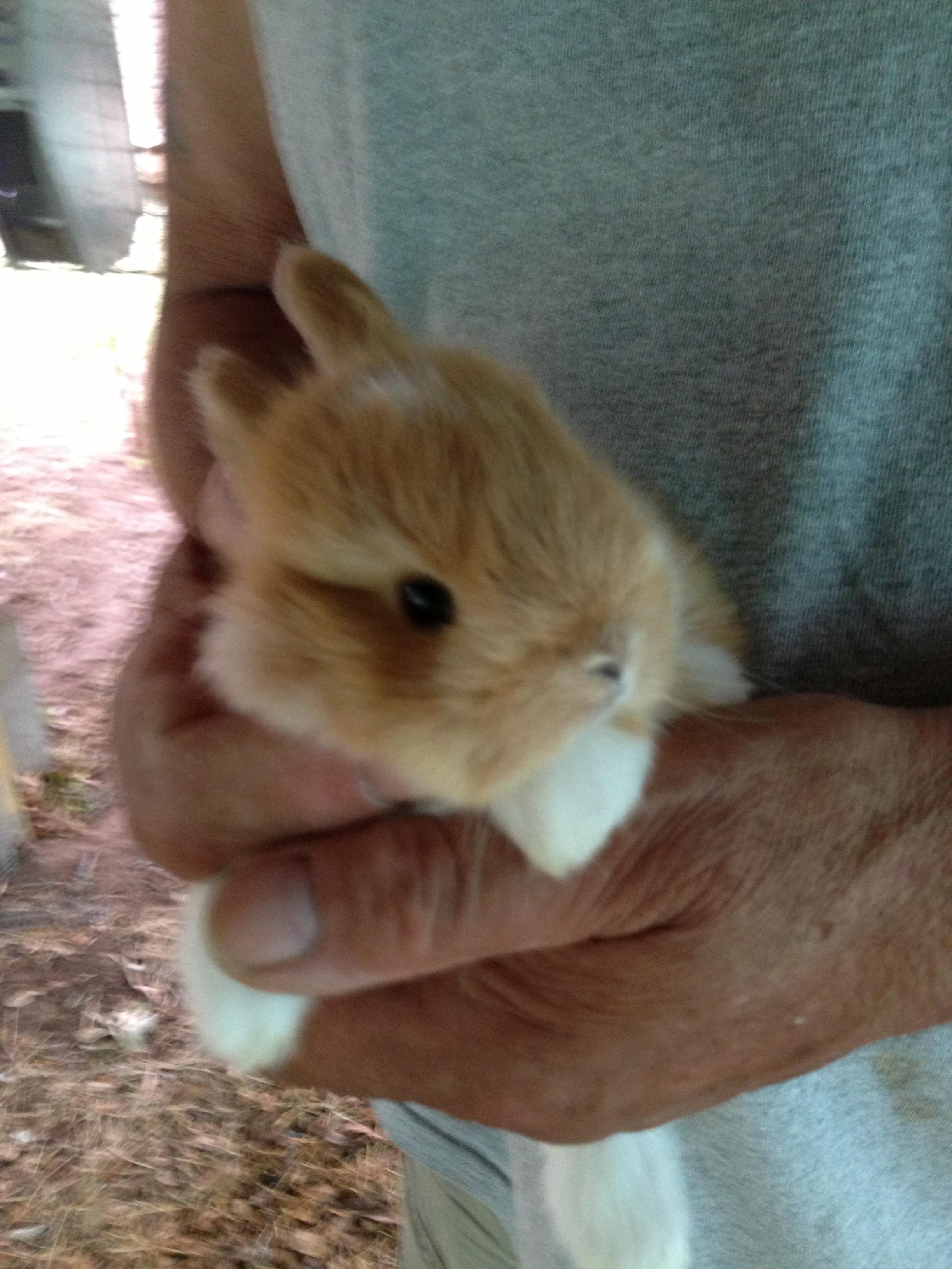 Bunnies in Beeville