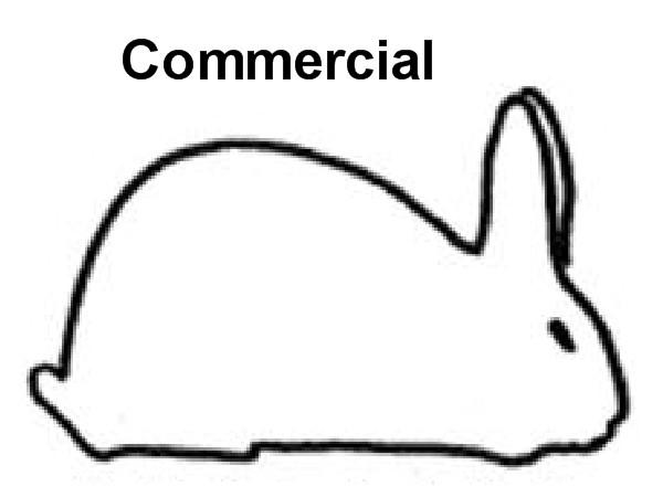 Commercial Rabbit Breeds