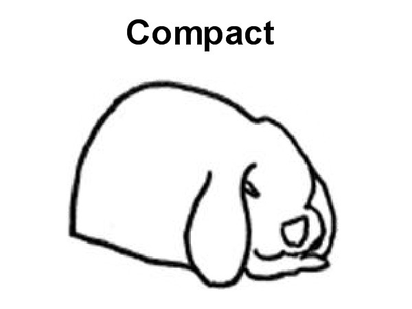 Compact Rabbit Breeds