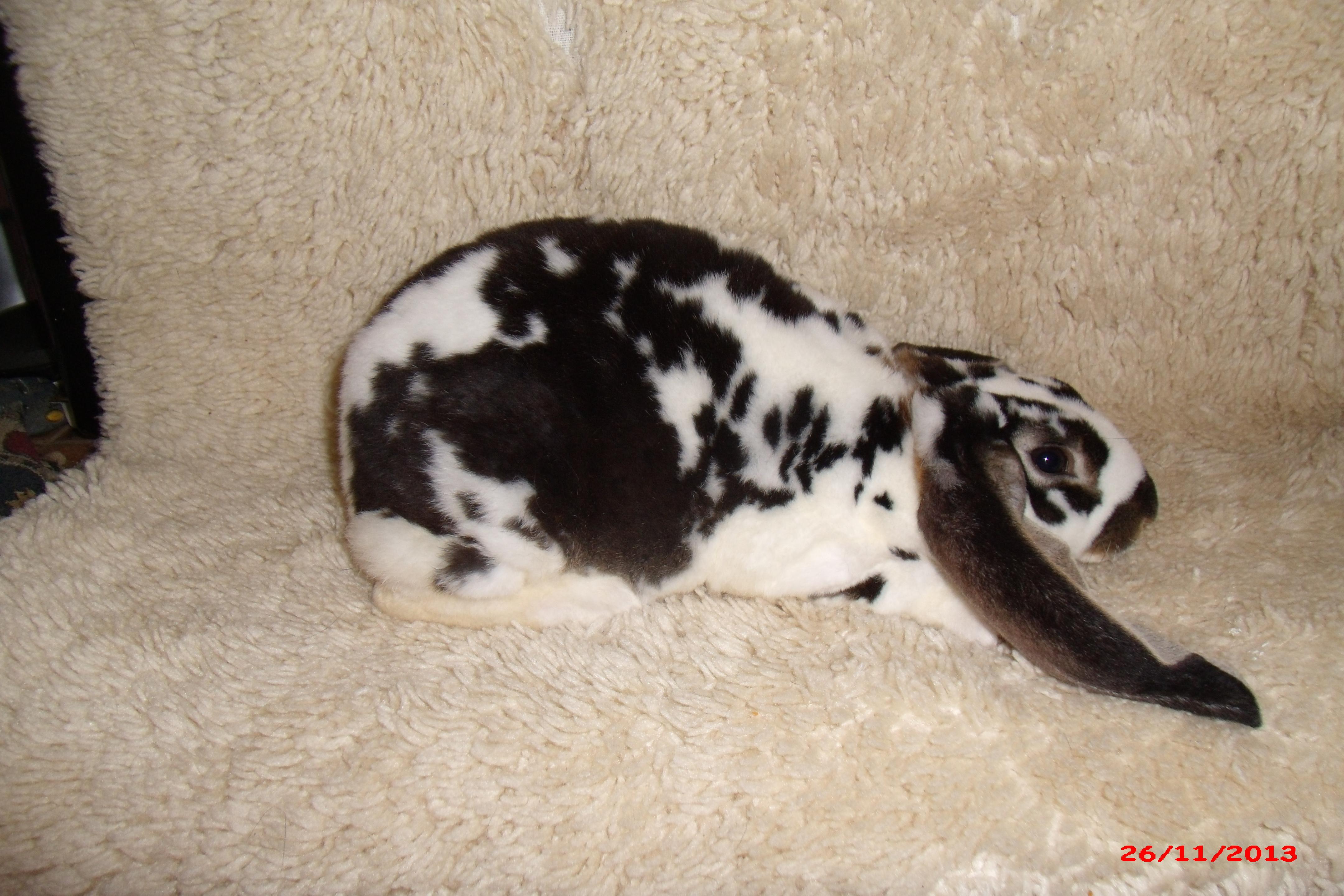 Velveteen Rabbits