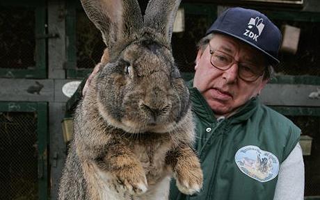 Giant Rabbit Breed