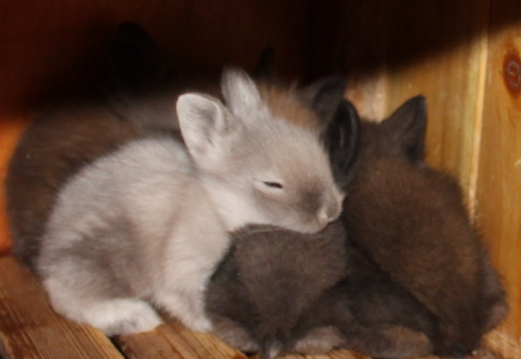Other Rabbits