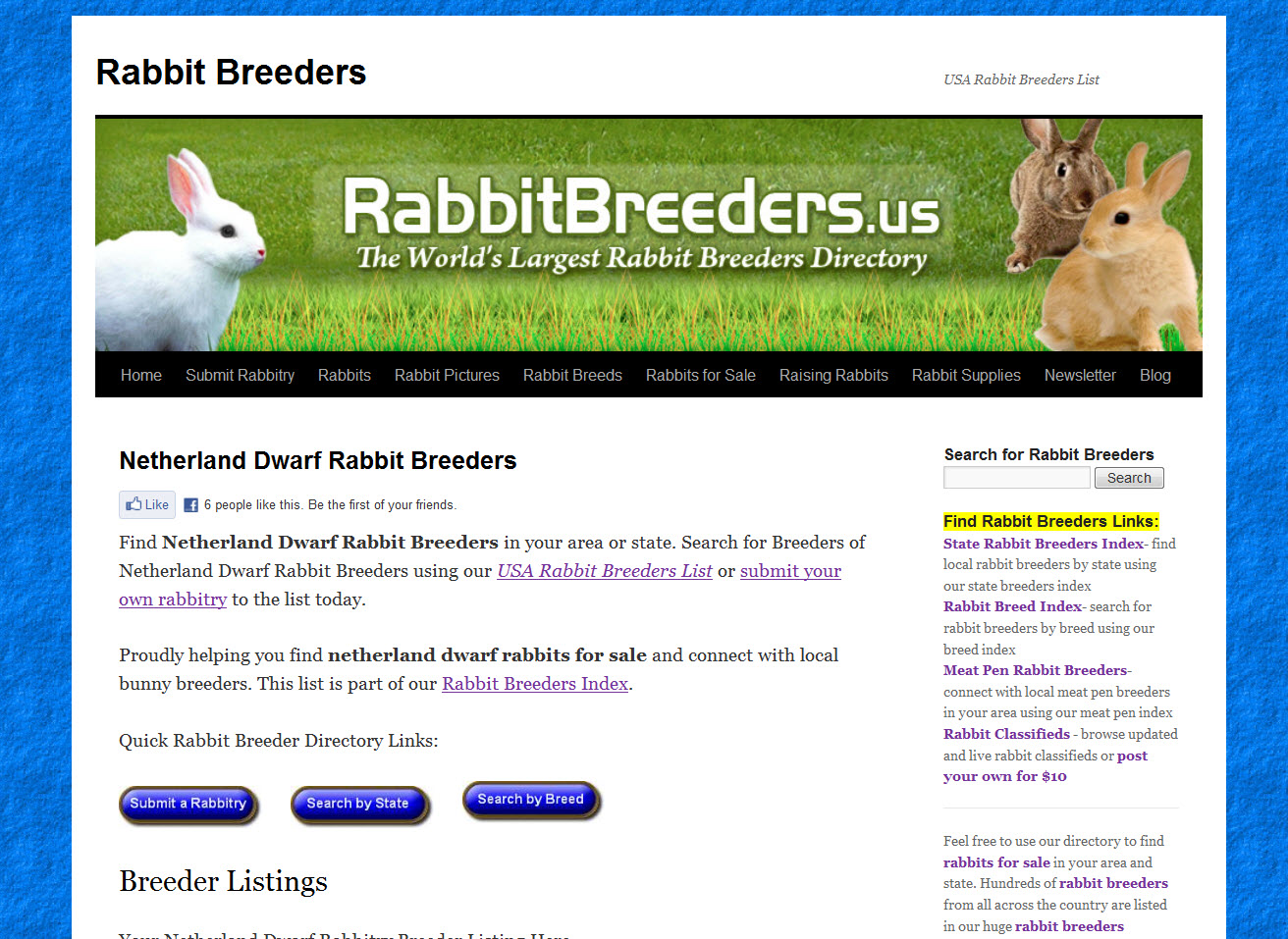 Netherland Dwarf Rabbits for Sale