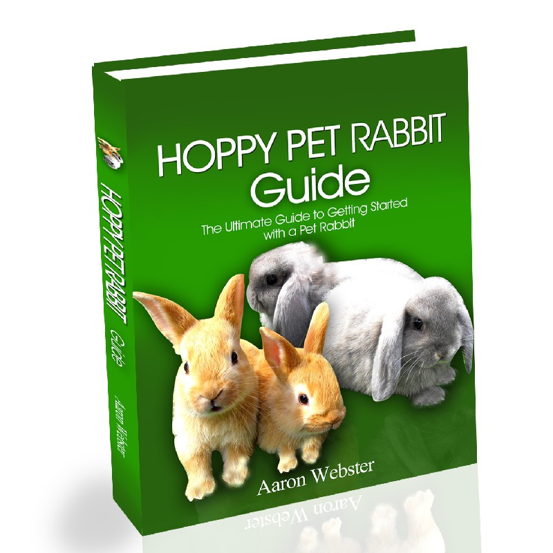 Pet Rabbit Guide