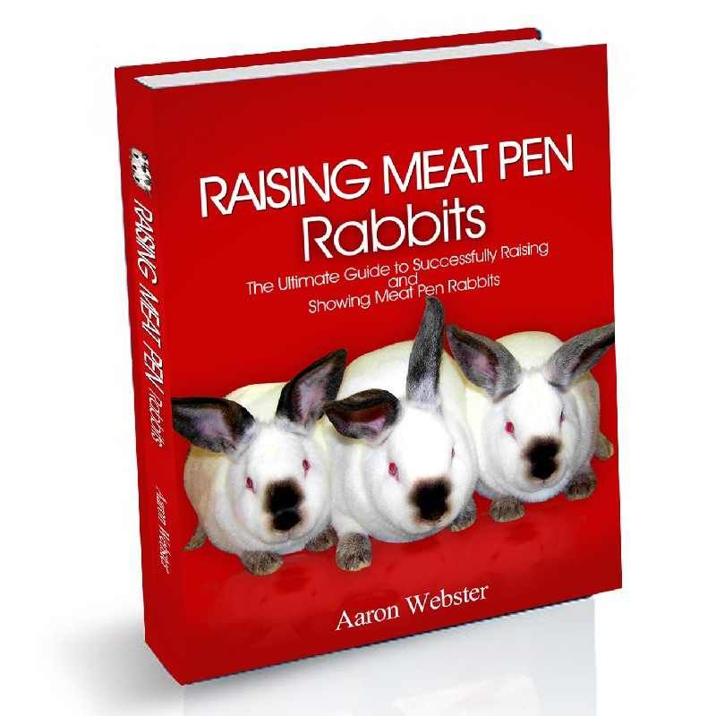 Meat Pen Rabbits