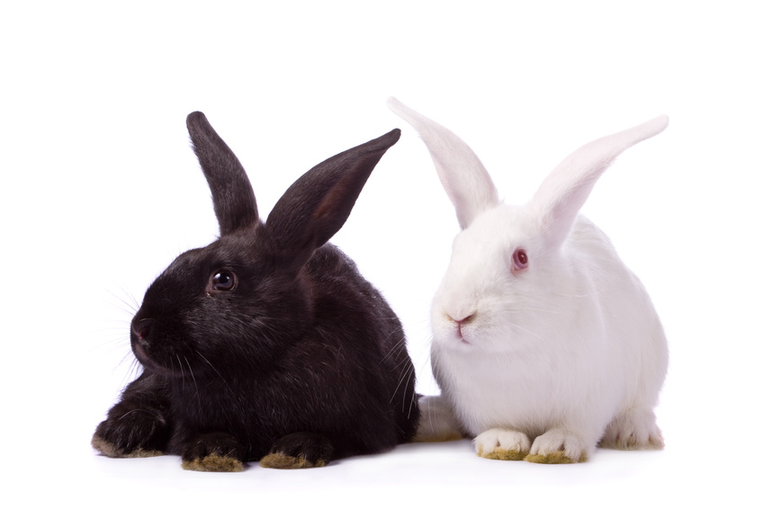 Types of Rabbits